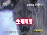 """《生活早参考》 20150630 """"爱拼才会赢""""系列节目 """"狼王""""的财富"""
