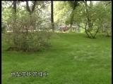 草坪建植工 第七集 草坪的养护1(中级)