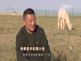 迟海涛羊驼致富经,我要靠羊驼赚大钱(20151104)