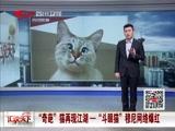 """""""奇葩""""猫再现江湖 一""""斗眼猫""""穆尼网络爆红"""