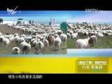 """行走""""青海湖"""" 食纷了得 2015.12.06 - 厦门电视台 00:08:40"""