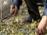 《中华民族》 20151208 走进和田 第三集 时光协奏(下)