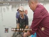 沈文根养鱼致富经,养鱼一年 多卖1000万元