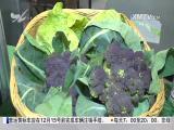 国际果蔬产业(厦门)博览会开幕