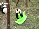 《熊猫日记》第104期:我的小木马分给你玩!