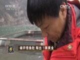 """《致富经》 20160715 破开怪鱼肚 掏出""""黑黄金"""""""