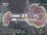 洪涛信箱:小真菌大用途 中华医药 2016.12.25 - 中央电视台 00:41:10