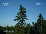 《航拍中国》第一季 第四集 黑龙江 00:49:57