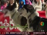 法国:奔跑吧雪橇犬!