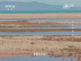 青海奇观·探秘青海湖(上) 00:24:05