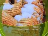 节气——时间里的中国智慧(七)朔冬藏瑞 00:36:55