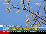 踏青赏花正当时 安徽:春风又绿江南岸 采石矶头红梅赞
