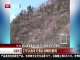 """[特别关注-北京]山桃迎春次第开 """"西山晴雪""""报春来"""