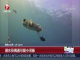 潜水员偶遇可爱小河豚
