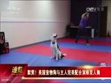 默契!美国宠物狗与主人完美配合演绎双人舞