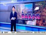 特区新闻广场 2017.6.4 - 厦门电视台 00:22:52