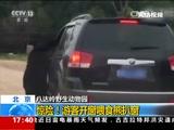 [新闻直播间]北京 八达岭野生动物园:惊险!游客开窗喂食熊扒窗