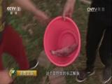 《消费主张》 20170814 中国夜市全攻略(武汉篇)