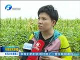 [河南新闻联播]河南广播电视台大型公益节目《脱贫大决战》在西华县拍摄