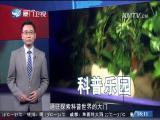 新闻斗阵讲 2017.8.24 - 厦门卫视 00:20:35