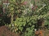 [讲述]经历重重困难 夫妻二人终将山谷种满鲜花 一年四季花开不败