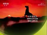 《探索发现》 20171009 伊犁马(下)以梦为马