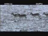 《魅力纪录》 20120814 东亚生态大勘探 第二集