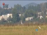 """[贵州新闻联播]黑颈鹤等珍稀鸟类如期""""入住""""威宁草海 越冬候鸟总数达到25000只"""