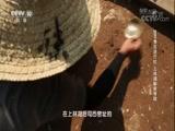 上林湖秘瓷寻踪 00:36:58