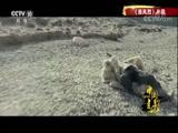 《行进中的中国光影》 警匪篇 00:49:41
