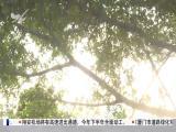 午间新闻广场 2018.1.13 - 厦门电视台 00:21:33