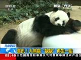 """[朝闻天下]马来西亚 喜讯!大熊猫""""靓靓""""再生一胎"""