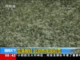 [朝闻天下]雪落痕轻 北京昨夜现初雪