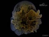 """《美丽科学》 """"重现化学""""系列之沉淀4:游弋在夜空中的精灵"""