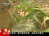 """[朝闻天下]动物""""大联欢"""" 内蒙古 威武草原狼 狗年春节也欢乐"""