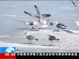 [朝闻天下]吉林珲春 敬信湿地候鸟云集