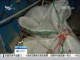非法捕捞花蛤苗 海洋部门专项整治