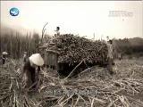 台共抗日先锋 李伟光 两岸秘密档案 2018.05.08 - 厦门卫视 00:41:31