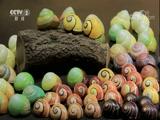 蜗牛的彩色皮肤是天生的 是真的吗 2018.05.12 - 中央电视台 00:07:54