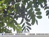 午间新闻广场 2018.5.19 - 厦门电视台 00:20:56