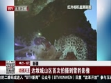 [特别关注-北京]新疆 达坂城山区首次拍摄到雪豹影像