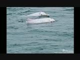 寻找白海豚 00:02:53