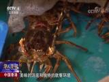 一味一故事 中国香港 食客每天排长队 就为尝一口花胶鸡汤 华人世界 2018.07.05 - 中央电视台 00:02:25