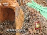 [走遍中国]深圳深湾汇云中心超级建筑群