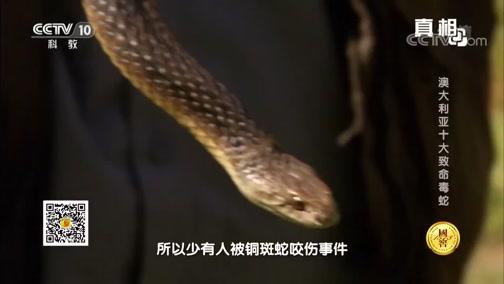 《真相》 20180904 澳大利亚十大致命毒蛇