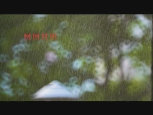 【看见厦门微视频征集】微观|凤凰花开 00:01:28