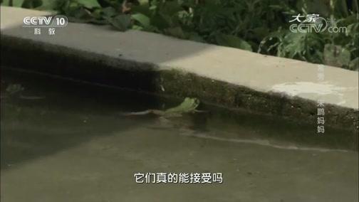 《大家》 20180919 野生动物保护专家 常秀云