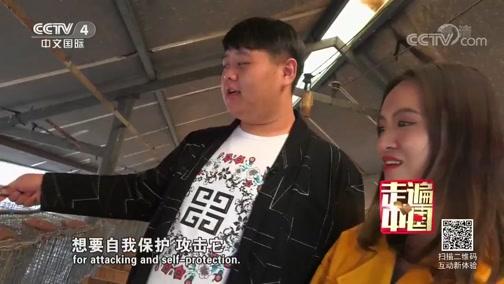 裘都大营闯关记 走遍中国 2018.11.21 - 中央电视台 00:26:18