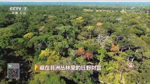 《致富经》 20181127 藏在非洲丛林里的狂野财富