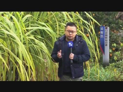 从台湾的田间到餐桌 驻台记者发现了2019年的饮食新风尚 00:04:49